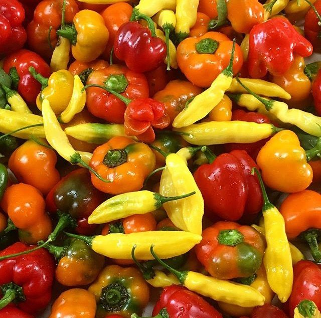 Bialas Peppers CSA bi-weekly