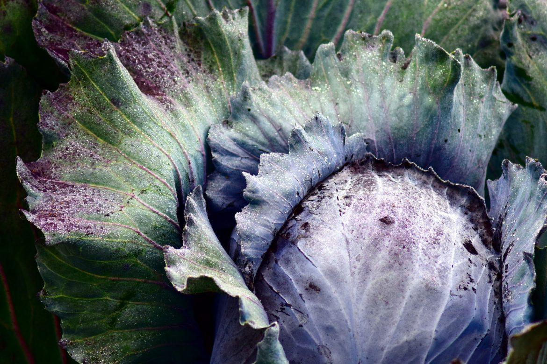The FarmGirl Cooks Guide to Winter Veggie Storage