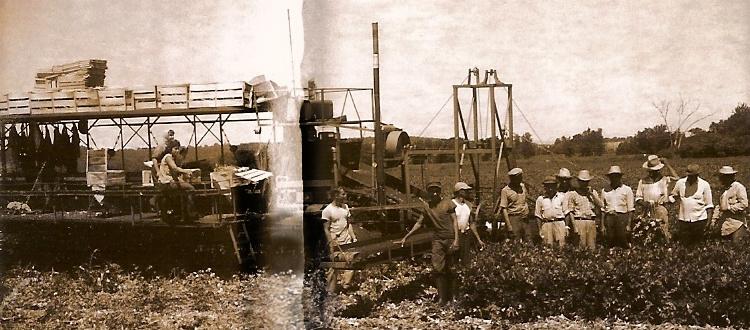 mule train work crew 1960