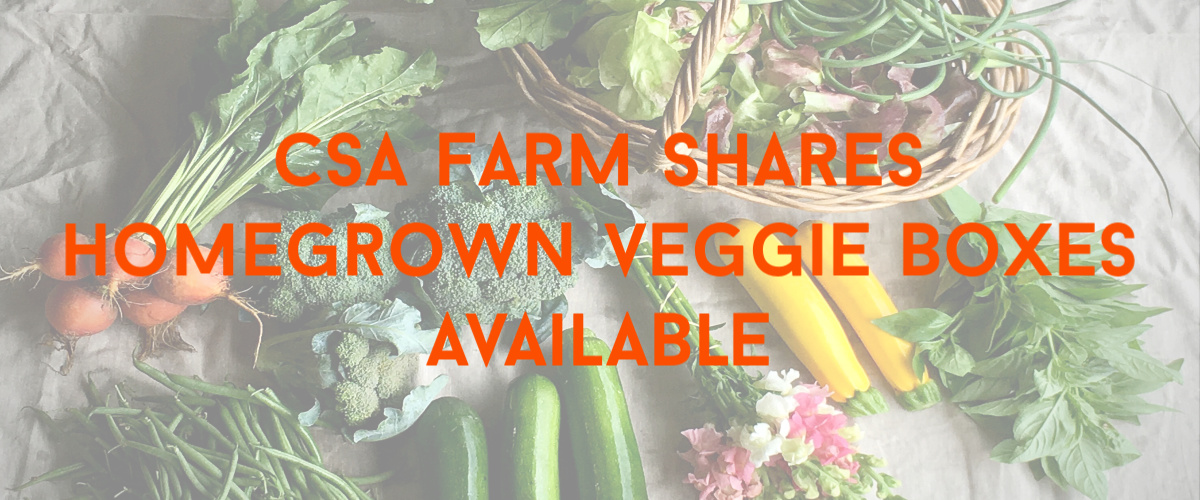Bialas Farms CSA banner 2019